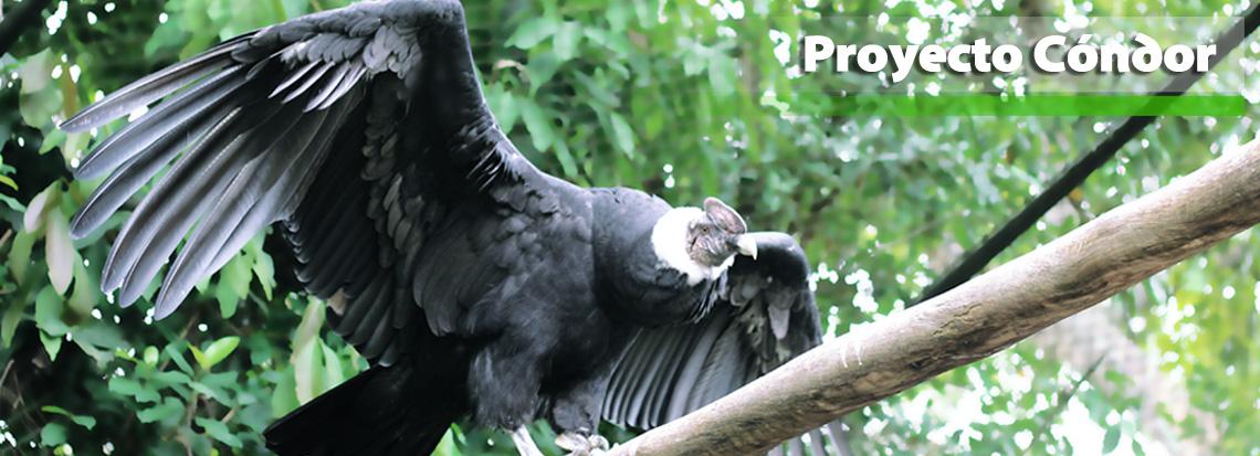 poryecto-condor