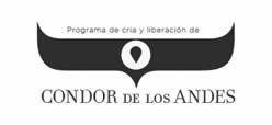 Cóndor de los Andes