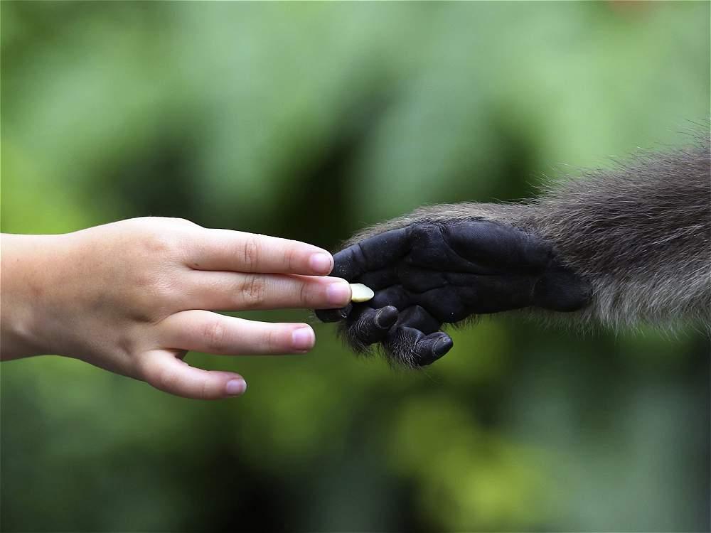 El Zoológico Santacruz, un paraíso terrenal a pocos minutos de Bogotá