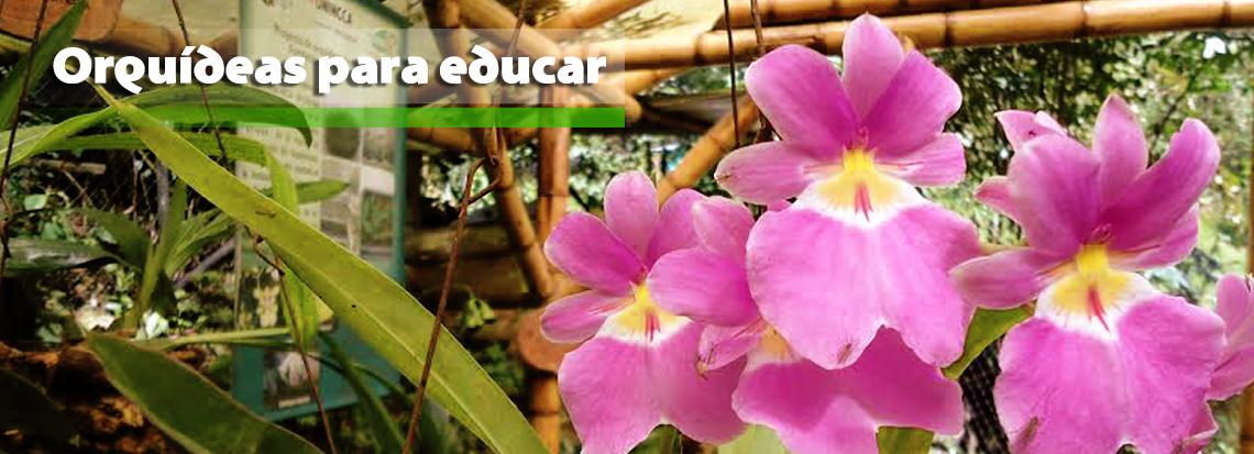 poryecto-orquideas