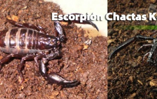 escorpion_2