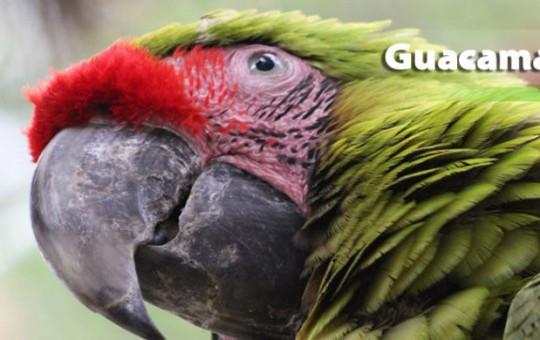 guacamayaverde-1080x390_2