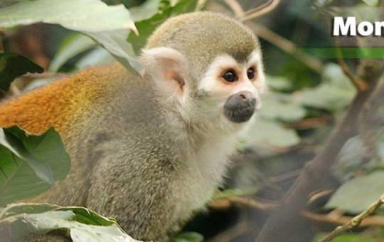 mico-ardilla-1080x390_1