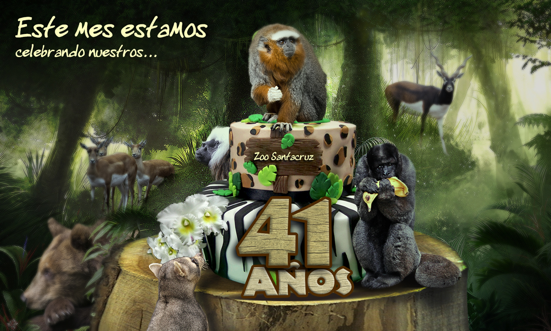 selva1