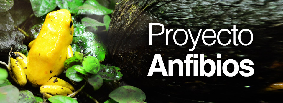 proyecto_anfibios1